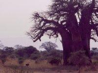 africa_008