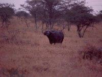 africa_037